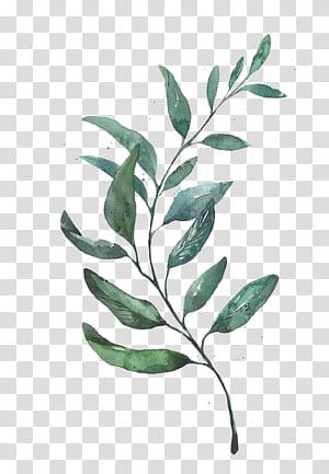 Lukisan Cat Air Menggambar Daun Seni Grafis, Daun Cat Air, tanaman berdaun hijau png
