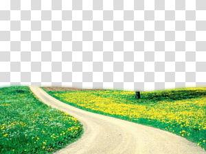 Kecantikan Spring Nature, Nature, jalur cokelat antara rumput hijau png