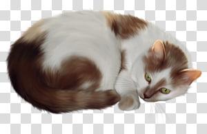 kucing putih dan oranye, Kucing Persia, Kucing PNG clipart