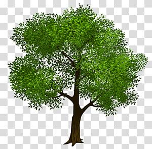 Ilustrasi Pohon, Pohon Hijau, coklat dan hijau png