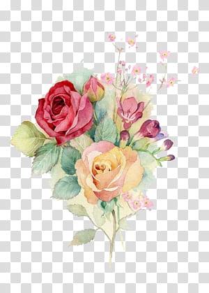 Centifolia roses Mawar taman desain bunga Buket bunga Bunga potong, bunga cat air, bunga petaled pink dan kuning png