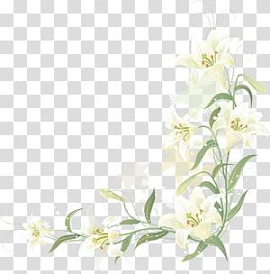Perbatasan lily yang dilukis dengan tangan, ilustrasi bunga lily putih png