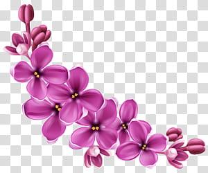 Bunga, Dekorasi Bunga Musim Semi Merah Muda, lukisan bunga ungu png
