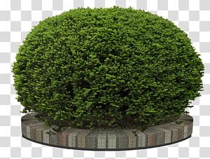 tanaman semak hijau, Pohon taman bunga, semak-semak png