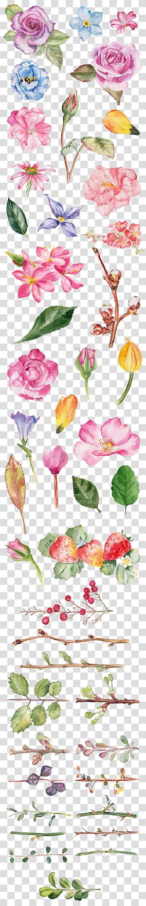 Lukisan Cat Air Gambar Bunga Ilustrasi, Cat air mawar, berbagai macam warna bunga dengan latar belakang biru png