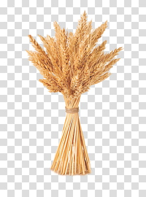 bundel gandum, Gandum Sereal Barley, bundel gandum yang sama png