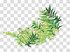 ilustrasi daun hijau, Komik Kartun Daun, Kartun dicat daun hijau PNG clipart