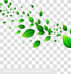 Daun, Bila bahan daun hijau segar, ilustrasi daun hijau png