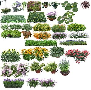 berbagai macam kolase tanaman bunga, Pohon Bunga, Pemandangan sabuk hijau png