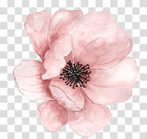 Lukisan Cat Air Bunga, Bunga merah muda yang dilukis dengan tangan, bunga merah muda png