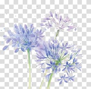 Desain bunga Potong bunga Krisan Biru, bunga Cat Air, ungu lily dari bunga Inca png