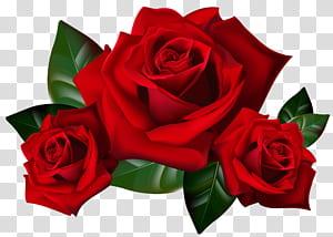 Mawar, Mawar Merah, mawar 3D seni mawar png