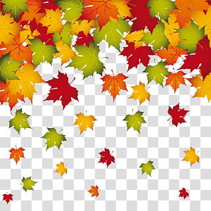ilustrasi daun maple hijau, merah, dan oranye, warna daun musim gugur, Fall Leaves Decoration PNG clipart