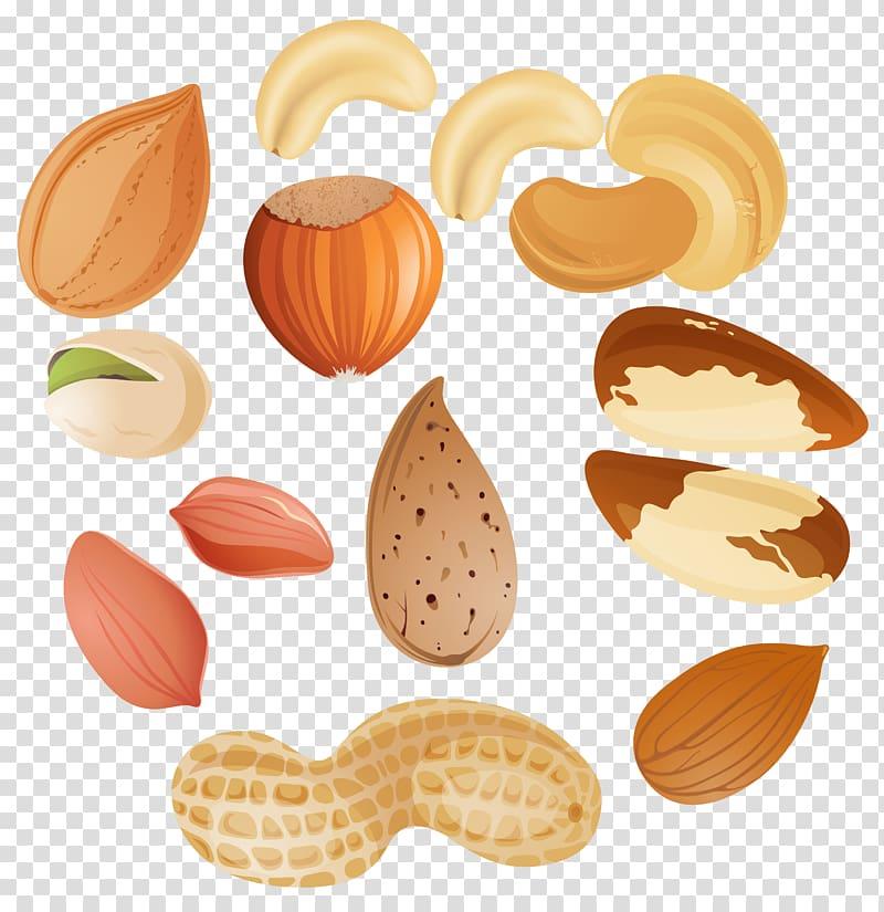 berbagai macam ilustrasi kacang, Alergi kacang Pohon Nucule, Kacang Clipar png