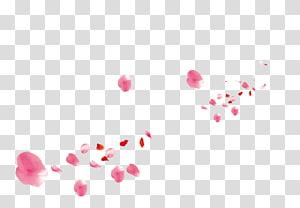 ilustrasi kelopak mawar merah muda, kelopak mawar Pantai Kelopak Bunga Merah Muda, kelopak mawar merah muda png