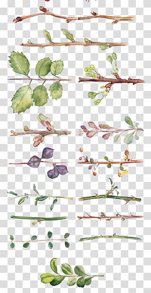 Lukisan Cat Air Bunga Menggambar desain Bunga, Semua jenis cat air yang dilukis dengan tangan daun dan cabang, ranting koleksi ilustrasi PNG clipart