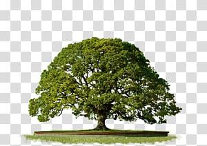 pohon hijau, Pohon Ikon Komputer Geni, Pohon Atas png
