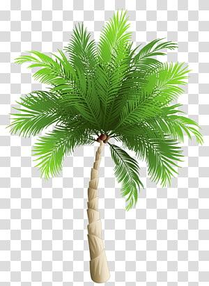 Pohon palem Kurma kurma Phoenix canariensis Kelapa, Pohon Palem, karya seni pohon palem hijau png