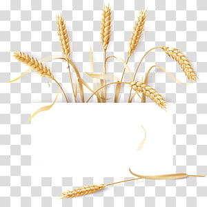 ilustrasi biji-bijian, gandum umum Barley Cereal Ear, wheat png