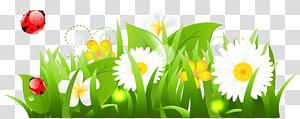 Flower, White Flowers Grass and Ladybugs, close-up bunga petaled putih dengan ilustrasi rumput hijau png