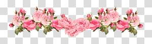 Bunga pink Rose, Vintage Pink Rose Border, bunga petaled pink png