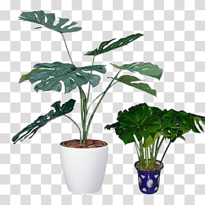 ilustrasi tanaman pot monstera deliciosa, pabrik keju Swiss Light Houseplant catalysis, Tanaman pot kecil PNG clipart