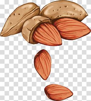 ilustrasi almond, alergi kacang pohon Gambar Benih, Almond yang dilukis dengan tangan png