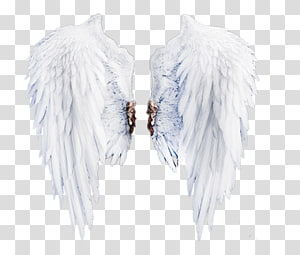 ilustrasi bulu putih, Leher Bulu, Sayap Putih png