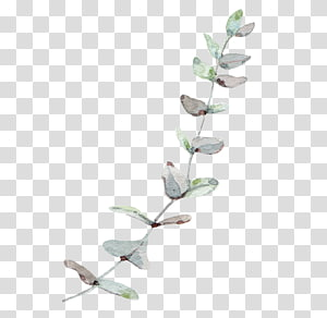 Pohon getah dedaunan, angin Nordik Daun Eucalyptus, tanaman berdaun hijau png