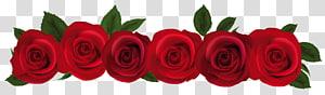 Mawar Merah, Mawar Merah, ilustrasi bunga tujuh mawar merah png