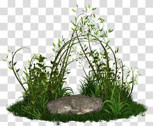Menanam Rumput Pohon, menanam png