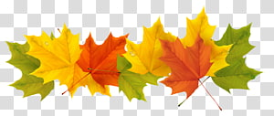 Spanyol Weather Musim Spanyol Winter, Fall Leaves, maple leaves ilustrasi PNG clipart
