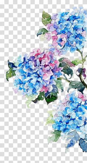 Lukisan Cat Air Gambar Bunga, Bunga Cat Air, lukisan bunga biru dan merah muda png