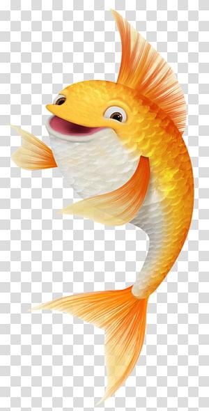 ilustrasi ikan oranye, Gambar Ikan Mas Koi, Ikan koi tertawa png