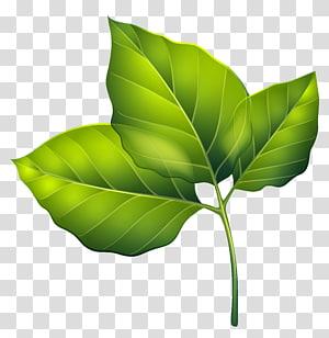 ilustrasi daun hijau, Daun Hijau, Tiga Daun Hijau PNG clipart