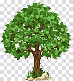 pohon daun hijau, pohon putih, pohon png