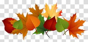 Warna daun musim gugur, Daun Jatuh, maple coklat dan hijau dan ilustrasi daun pohon PNG clipart