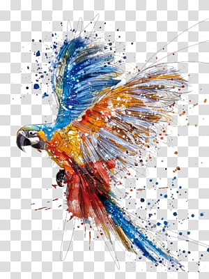 Lukisan Cat Air Menggambar Ilustrasi, Tangan berwarna percikan burung beo, lukisan macaw png