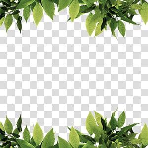 daun hijau, file Komputer Daun Hijau, Batas daun hijau png