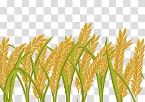 Sawah Gandum, Padi Kartun, ilustrasi gandum merah png