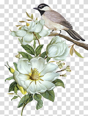 Pixel Computer file, Gratis bunga yang dilukis dengan tangan dan pola dekoratif burung, burung coklat dan putih di ilustrasi batang pohon png
