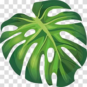 Ilustrasi Daun Arecaceae Euclidean, daun pisang musim panas, ilustrasi daun hijau png