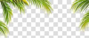 Pohon Kelapa Arecaceae, tekstur tepi daun kelapa hijau, ilustrasi pohon palem png