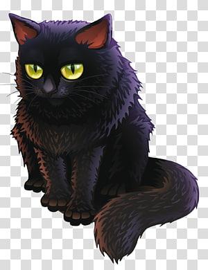 kucing hitam, kucing Bombay Kucing hitam Kucing, Kucing Penyihir png