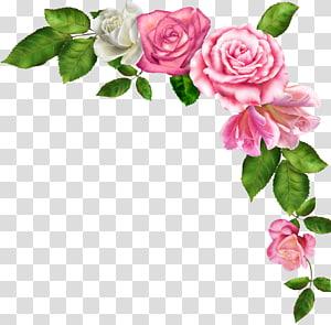 bunga merah muda, Perbatasan dan Bingkai Bunga merah muda, bunga cat air png