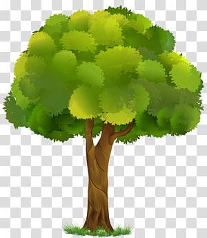 ilustrasi pohon hijau dan coklat, Sebuah pohon Rendering White, Tree png