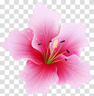 Bunga merah muda, Bunga Merah Muda Besar, ilustrasi bunga kembang sepatu merah muda png