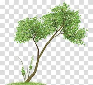 format file, Pohon, ilustrasi pohon berdaun hijau png