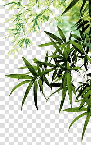 Ikon Tinta Daun Bambu, Daun bambu, daun bambu hijau pada siang hari png