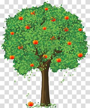 Buah Lemon Tree Fancy dan Lemon Tangerine, Painted Apple Tree, pohon apel diisi dengan stiker buah grafis png